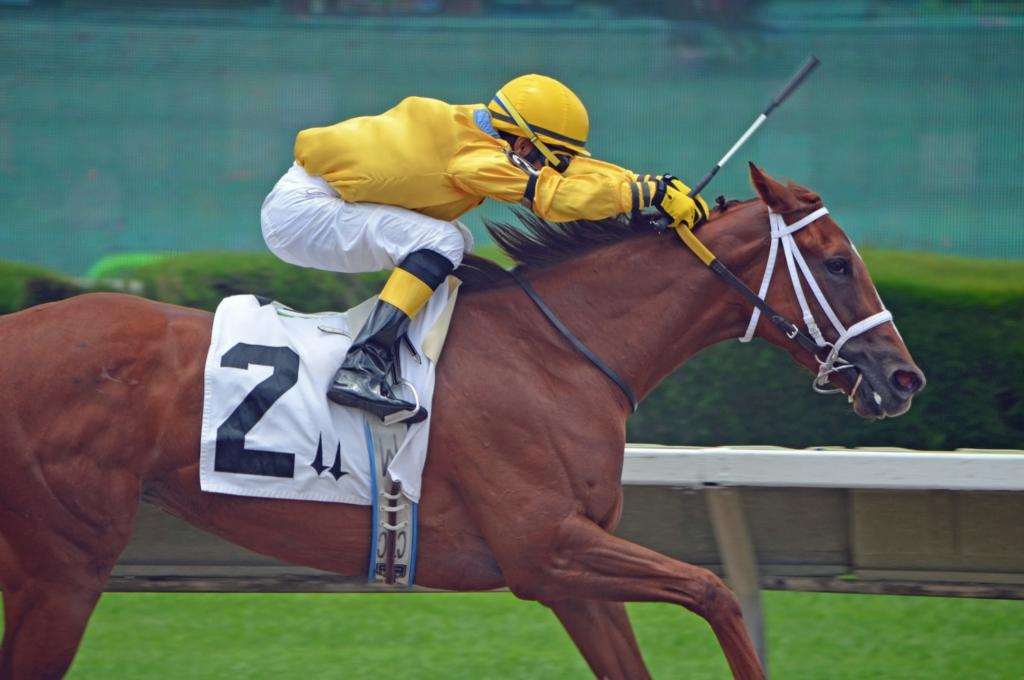 Can jockeys bet on races tree demolisher betting